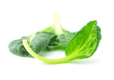 Organic baby spinach Stock Photography