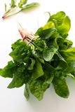 Organic baby spinach tied with simple string Royalty Free Stock Image