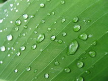 Organic background. Leaf with drops stock photo