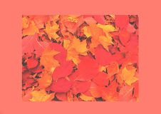 Organic background of autumn leaves, natural light royalty free stock photography