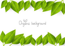 Organic background Royalty Free Stock Photography