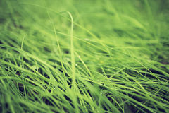 Organic background, green spring grass close up Stock Images