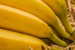 Organic bananas, latin – musa. Banana fruits on natural straw background Stock Photos