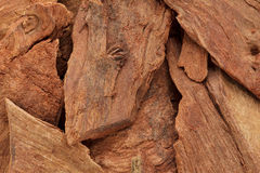 Organic barks of Arjuna or Arjun Tree (Terminalia arjuna). Macro close up background texture.Top view stock photo