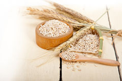 Organic barley grains. Over rustic wood table macro closeup Stock Image