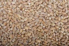 Organic barley grains Royalty Free Stock Image