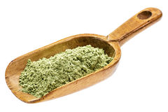 Organic barley grass powder Royalty Free Stock Images