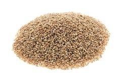 Organic barley Royalty Free Stock Photography