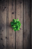 Organic basil plant in the basket Royalty Free Stock Photos