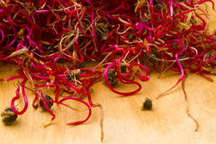 Organic beetroot germinated sprouts Stock Image