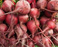 Organic Beets royalty free stock photos