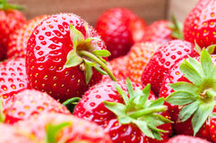 Organic Berries Closeup Stock Photography