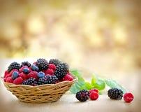 Organic berry fruit in wicker basket Stock Image