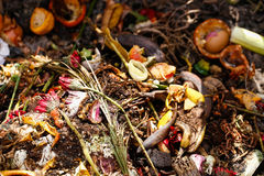 Organic biological kitchen waste. Rotten food and leftovers from cooking, prepared for composting. Flowers, coffee grounds, banana, salad, onions and carrot Royalty Free Stock Photography