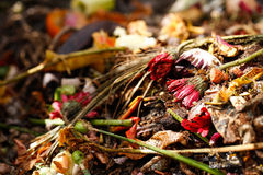 Organic biological kitchen waste. Rotten food and leftovers from cooking, prepared for composting. Flowers, coffee grounds, banana, salad, onions and carrot Stock Image