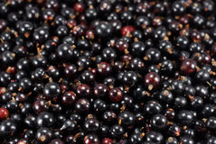 Black Currants blackcurrants Stock Images