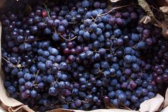 Black grapes royalty free stock photos