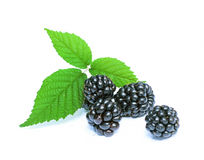 Organic blackberries. On a white background Stock Photography