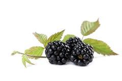 Organic blackberries Stock Photography