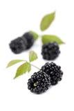 Organic blackberries Royalty Free Stock Photo