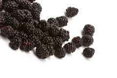 Organic blackberries Stock Images