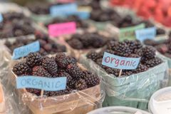Organic blackberries in basket with plastic liner at farmer mark. Selective focus, close-up heap of organic blackberries in basket with plastic liner. Fresh Royalty Free Stock Photo