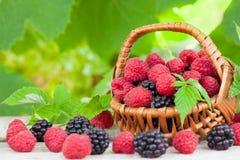 Organic blackberries and raspberries Royalty Free Stock Image