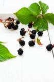 Organic blackberry Stock Image