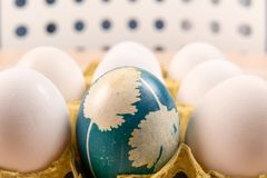 A organic blue easter egg standing in middle of the white eggs, easter holiday decorations, easter concept backgrounds. With copy space royalty free stock image