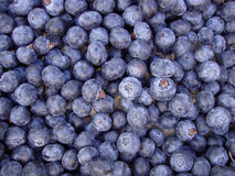 Organic Blueberries Royalty Free Stock Photo