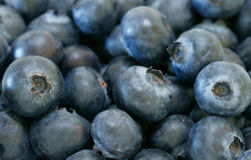 Organic Blueberries. In a box Royalty Free Stock Photos