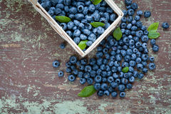 Organic blueberries Stock Images