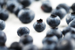 Organic blueberries on a white ceramic surface Royalty Free Stock Photography