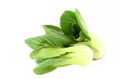 Organic boc choy Royalty Free Stock Photos