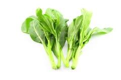 Organic boc choy Stock Images