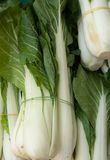 Organic Bok Choy Stock Images
