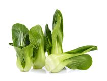 Organic bok choy isolated on white background Stock Photography