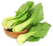 Organic Bok Choy Stock Photos