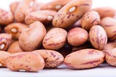 Organic Borlotti Beans Stock Images