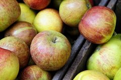 Organic Braeburn apples Stock Images