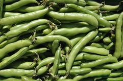 Organic Broad Beans. Close up of handpicked organic broad beans Stock Photography