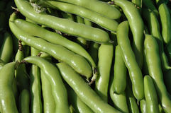 Organic Broad Beans Stock Images