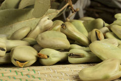 Organic broad beans in drying process Royalty Free Stock Photos