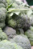Organic Broccoli Royalty Free Stock Image