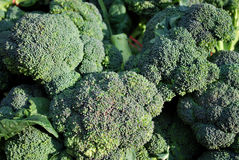 Organic Broccoli Royalty Free Stock Photo