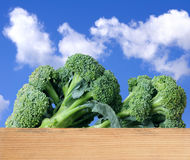 Organic broccoli Royalty Free Stock Images