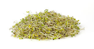 Organic Broccoli Sprouts Stock Photography