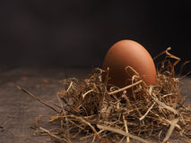 Organic brown egg. In a nest on a wooden background stock photos