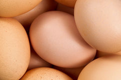 Organic brown eggs in filled frame format Royalty Free Stock Photography