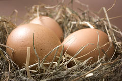 Organic brown eggs in a nest of hay. Three fresh brown chicken eggs lie in a nest of hay on a brown background Royalty Free Stock Images
